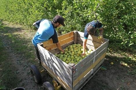 Agriculture : cette année, le bio cartonne dans le Sud-Ouest | Agriculture biologique | Scoop.it