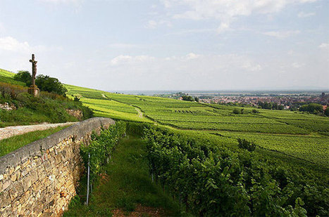 Anson: The great #Alsace #wine sweetness debate | Vitabella Wine Daily Gossip | Scoop.it