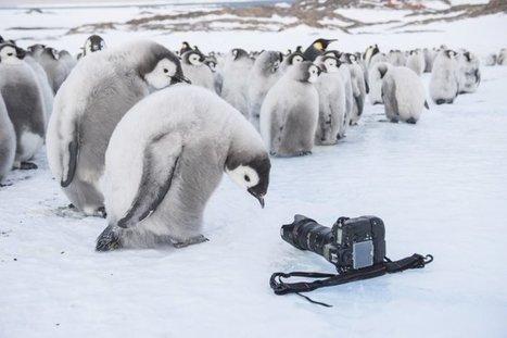 Interview : Vincent Munier, photographe de nature - Le Monde de la Photo | La photographie, news, expositions, tuto, matériel, ....  Photo, photography, photographer, photographe | Scoop.it
