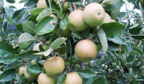 Va-t-on se battre pour des pommes ? | Elections chambre d'agriculteurs 2013 : la Coordination Rurale s'engage | Scoop.it