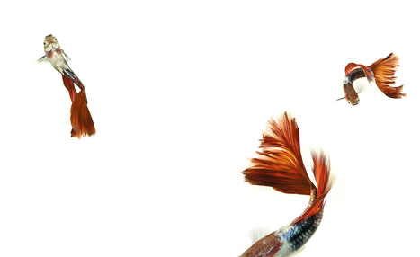 The Fish Book | Ernest Goh | Artophilia - Because we need Art in our Life | Scoop.it