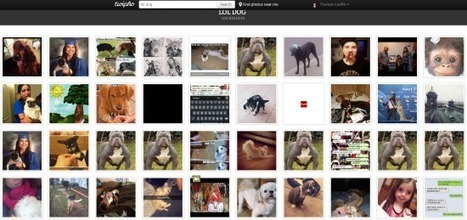 Twipho : un moteur de recherche de photos pour Twitter | Quoi de neuf sur les réseaux sociaux | Scoop.it