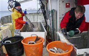 ECONOMICS - Norway, Russia see #cod boom despite worldwide #overfishing | Rescue our Ocean's & it's species from Man's Pollution! | Scoop.it