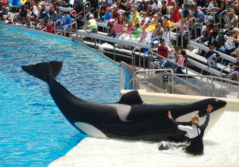 'Blackfish' Director: 'I Hope This is Only the Beginning'  | Nature Animals humankind | Scoop.it