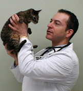 Cat Man Do | Dr. Arnold Plotnick: Women in veterinary medicine | Feline Health and News - manhattancats.com | Scoop.it