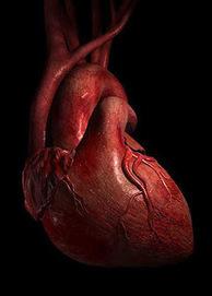 Cardiologist in South Miami: Why Cardiac Rehabilitation | Health | Scoop.it