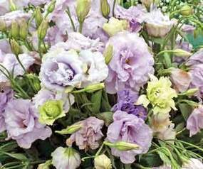 Es BC principal Estado en exportación de flores - Oem - La Voz de la Frontera - OEM | El cultivo de gladiolos | Scoop.it
