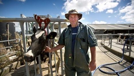 Nouvelle-Zélande : les éleveurs diminuent leur production tant que les prix restent faibles   Enjeux agricoles contemporains   Scoop.it