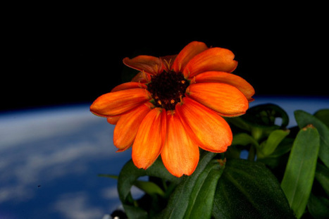 #Photos of the #First #Flower #Grown in #Space. #art #photography #science #nature | What about? What's up? Qué pasa? | Scoop.it