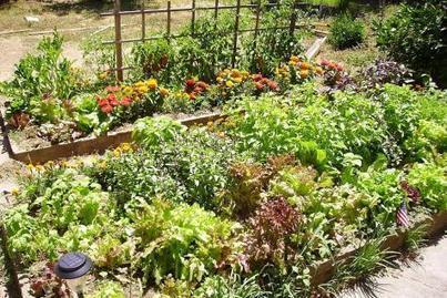 La permaculture, au cœur du potager du futur | Les colocs du jardin | Scoop.it