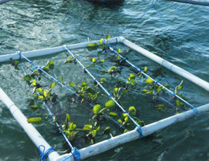COSTA RICA: Aquatic gardens created for large-scale production | Water Farming | Scoop.it