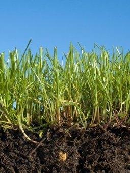 21 Expert Organic Lawn Care Tips | Gardener's Life | Scoop.it
