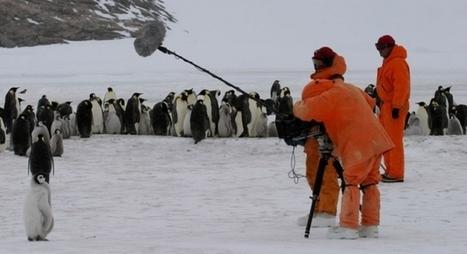 La marche d'un empereur  / à réécouter #podcast France Inter - #manchot #antarctique | Arctique et Antarctique | Scoop.it