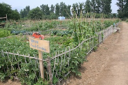 Organic Farming in Urban China: Reflections from a Study Tour | Post Growth Institute | Vertical Farm - Food Factory | Scoop.it