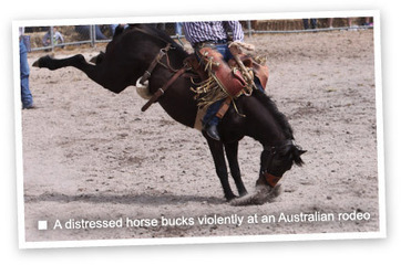 Help ban rodeo cruelty | Take action | Animals Australia | Nature Animals humankind | Scoop.it