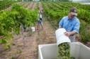 ISU professor sees Iowa as regional winery leader | Pull a Cork! | Scoop.it