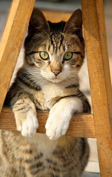 14 Cute Photographs of Cats | Inspiration | Photographic | Scoop.it