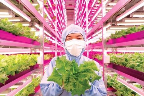 10000 laitues par jour. Quand le Japon prépare «l'après» | Economie Responsable et Consommation Collaborative | Scoop.it