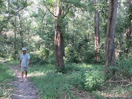 Forests turn bare, exhausted | Climate Change Adaptation in Southeast Asia | Scoop.it