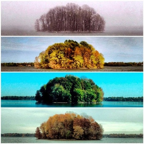 Fotógrafo tardo un año en tomar 4 fotos, ¿el resultado? ¡Es Increíble! | La Pastilla | COMUNICACIONES DIGITALES | Scoop.it