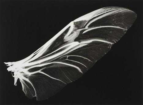 J'ai encore rêvé d'ailes | Le flux d'Infogreen.lu | Scoop.it
