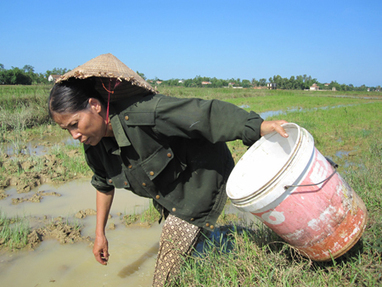 Ricefield crabs caught with pesticide | Food issues | Scoop.it