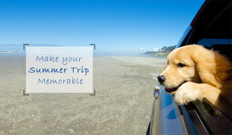 8 Tips That Will Make your Summer Trip Memorable with your Doggy - CanadaPetCare | Pet Supplies | Scoop.it