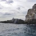 "Something ""Amazing"" Just Happened… | News of St. John | St Thomas Boat Rental | Scoop.it"