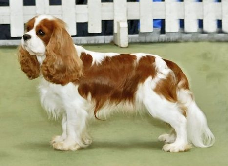 World's Most Expensive Dog Breeds - The Top 10 | Pets World | It's a dog's life | Scoop.it