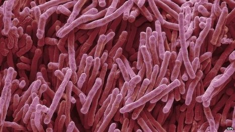 'Game-changing' antibiotic find | Media Cultures: Microbiology in the news | Scoop.it