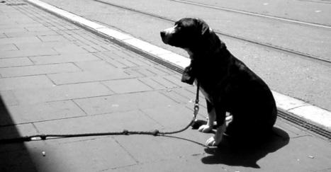 Neuf mois ferme pour le tueur de chien   CaniCatNews-actualité   Scoop.it
