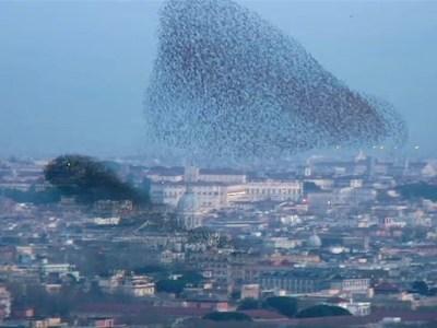 Falcon Feeding Frenzy | What is stress? | Scoop.it