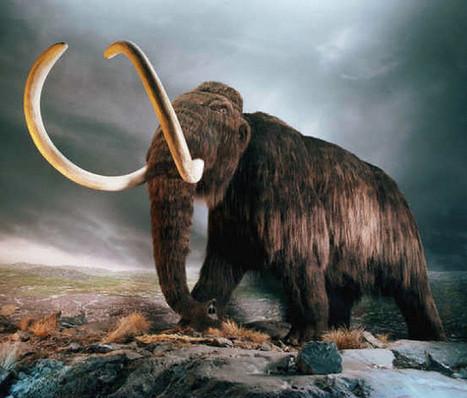 Buzz : un mammouth trouvé avec du sang liquide ? | Science en tête | Scoop.it