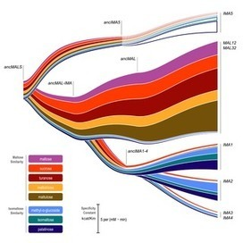 PLOS Biology: Resurrecting an Ancient Enzyme to Address Gene Duplication | Plant Breeding and Genomics News | Scoop.it
