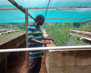 Aquaponic firm and Mercy Ships join efforts against famine | Aquaponics in Action | Scoop.it