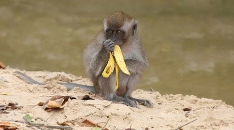 Stand to Reason | Monkey Morality: Can Evolution Explain Ethics? | Ethics | Scoop.it
