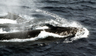 """WORLDWIDE: """"Sea Shepherd"""" launches """"Operation Zero Tolerance"""" for 2012 