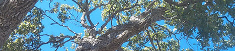 About Us - TreeLander -tree removal gympie | Professional tree maintenance | Scoop.it