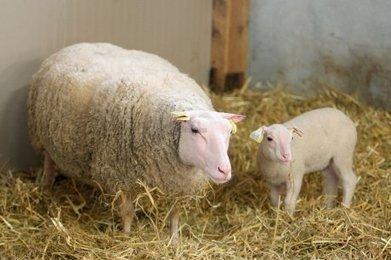 Le rendez-vous du monde agricole | Agriculture en Dordogne | Scoop.it