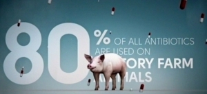 YOUR MEAT ON DRUGS: 30.6 Million pounds of it in 2010 : Will grocery stores cut outantibiotics? | YOUR FOOD, YOUR ENVIRONMENT, YOUR HEALTH: #Biotech #GMOs #Pesticides #Chemicals #FactoryFarms #CAFOs #BigFood | Scoop.it
