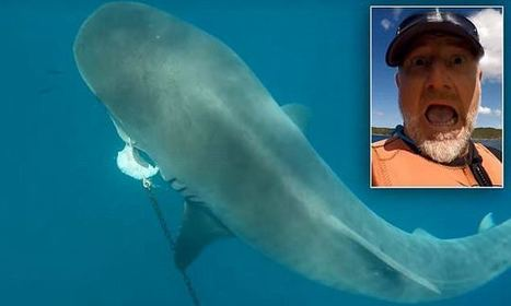 Jet-skier captures close encounter with a massive tiger shark | Oceans and Wildlife | Scoop.it
