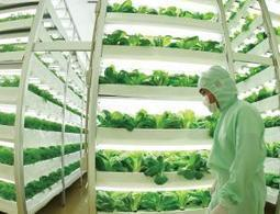 Vertical farms: sprouting all over the world | Potentially Disruptive | Scoop.it
