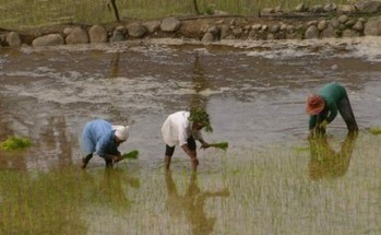 Agriculture sector posts 2.34% growth in 2011 despite typhoons ... | Indian Agriculture | Scoop.it