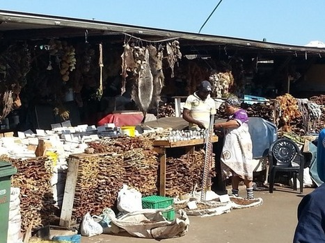 Monkey paws at Durban's muthi market | Wildlife Trafficking: Who Does it? Allows it? | Scoop.it