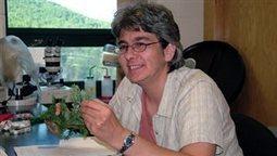 Canada. Le point des recherches sur l'arpenteuse de la pruche | EntomoScience | Scoop.it