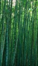 How Green is Bamboo Clothing? | The Chic Ecologist | Eco-fashion | Scoop.it