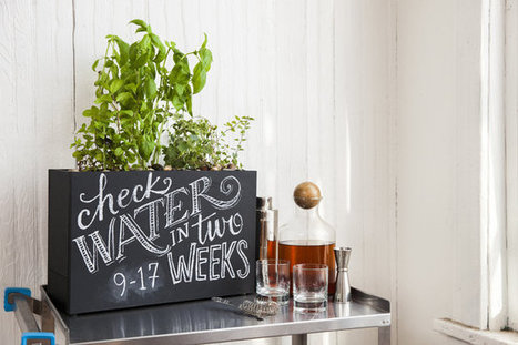 Container Culture: It's Time to Grow Your Own Hydroponic Herb(s) - TakePart | herbs | Scoop.it