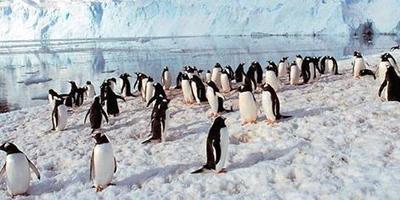 #Antarctique #Hurtigruten Supplément cabine individuelle offert   Hurtigruten Arctique Antarctique   Scoop.it