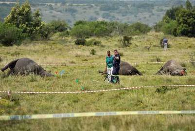32 rhino's poached in 2013 | The New Age Online | Kruger & African Wildlife | Scoop.it