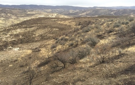 Soda Fire Recovery Not Going as Well as Portrayed in the Media | GarryRogers Biosphere News | Scoop.it